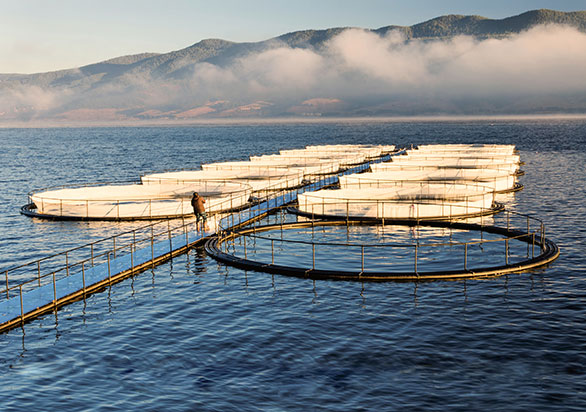 New G-BH8 Aqua for Fish Farming